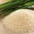 Рис — особенности приготовления