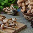 Сколько варить опята до готовности и 14 лучших рецептов с грибами